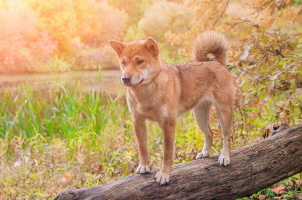 a cute dog standing on a wood